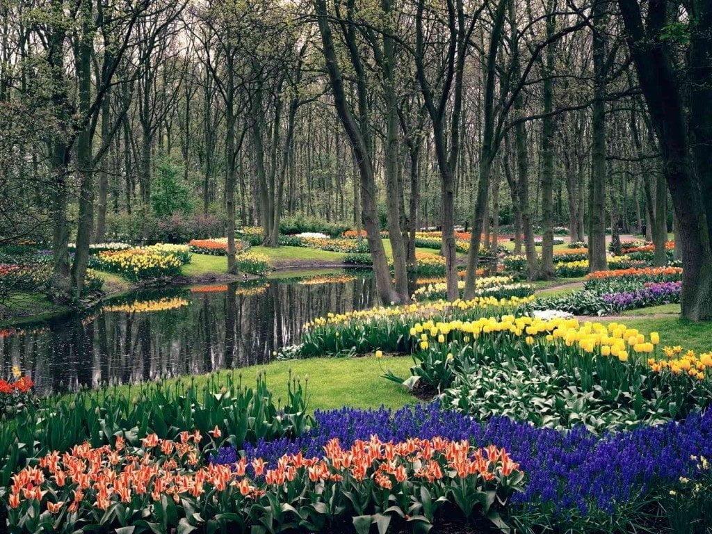 حديقة كيوكينهوف أجمل حديقة في العالم 5