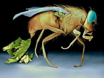 تحت الميكرسكوب : شاهد عالم الحشرات كما لم تراه من قبل ! 13