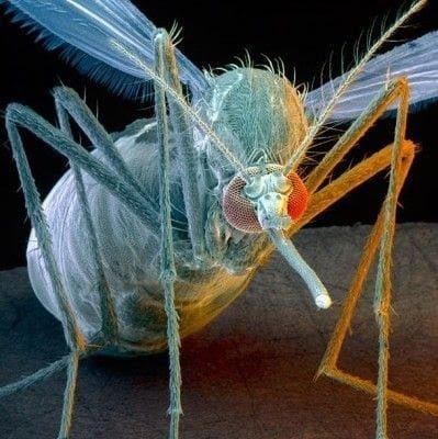 تحت الميكرسكوب : شاهد عالم الحشرات كما لم تراه من قبل ! 21