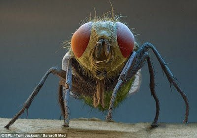 تحت الميكرسكوب : شاهد عالم الحشرات كما لم تراه من قبل ! 9