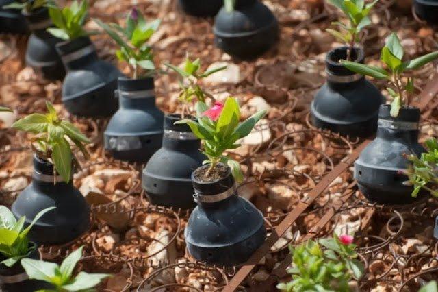 حياة تهزم المأساة : حديقة قنابل الغاز في قرية بلعين بالضفة الغربية ! 1
