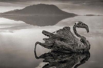 بحيرة ناترون الإفريقية الحمراء هل تحول الحيوانات إلي أحجار حقاً ؟! 2