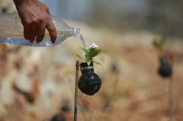 حياة تهزم المأساة : حديقة قنابل الغاز في قرية بلعين بالضفة الغربية ! 3