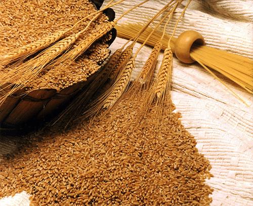 فوائد جنين القمح وطريقة تحضيره 3