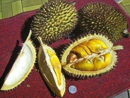 تعرف علي فوائد فاكهة دوريان : اغرب فاكهة في العالم ! 37