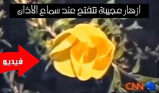 أزهار الأذان : شاهد تقرير CNN عن أزهار عجيبة تتفتح عند سماع الأذان ! 1