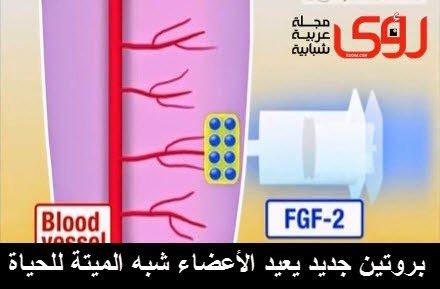 بروتين جديد لتجديد الخلايا يصلح الأسنان و يعالج الأعضاء التالفة بدلاً من بترها ! 1