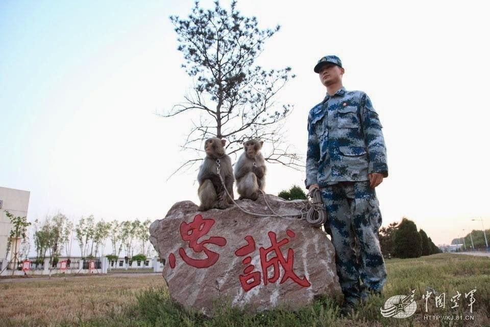 رسمياً : القرود تبدأ خدمتها في سلاح الجو الصيني ! 2