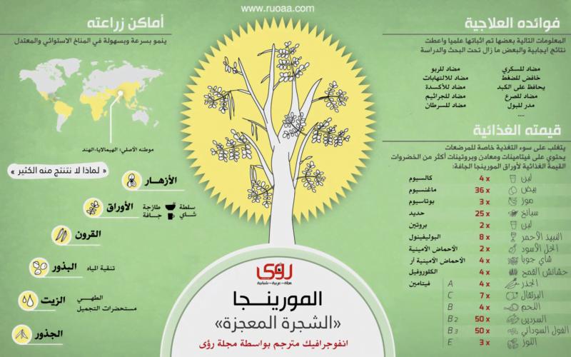 إنفوجرافيك : فوائد شجرة المورينجا - الشجرة المعجزة 6