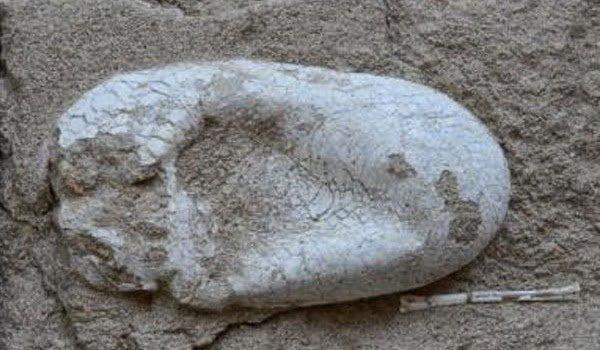 علماء صينيون يعثرون علي بيضة ديناصور عمرها 120 مليون سنه ! 8
