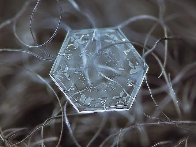 شاهد روعة بلورات الجليد تحت المجهر 6