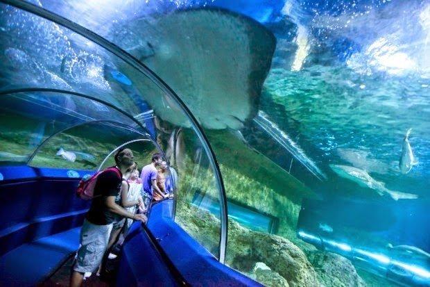 أكبر و أهم 10 أحواض زجاجية للأسماك في العالم ! 11