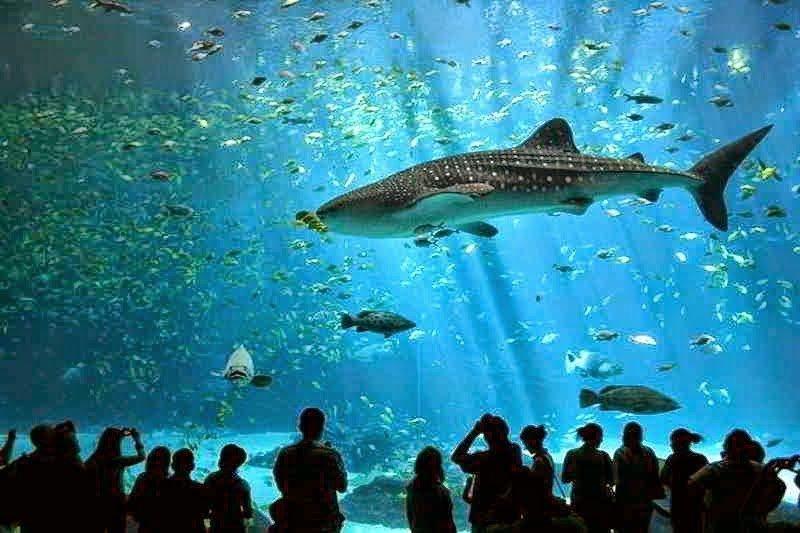 أكبر و أهم 10 أحواض زجاجية للأسماك في العالم ! 1