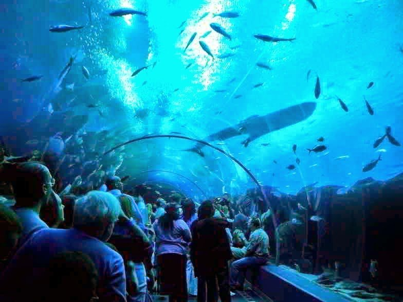 أكبر و أهم 10 أحواض زجاجية للأسماك في العالم ! 2