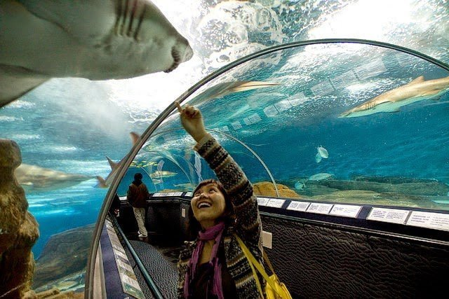 أكبر و أهم 10 أحواض زجاجية للأسماك في العالم ! 9