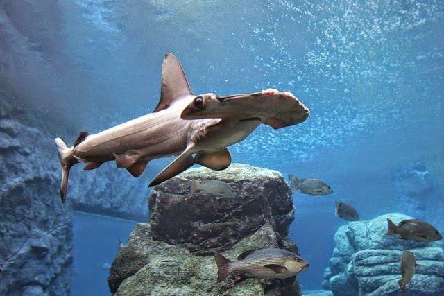 أكبر و أهم 10 أحواض زجاجية للأسماك في العالم ! 8