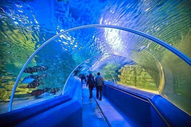 أكبر و أهم 10 أحواض زجاجية للأسماك في العالم ! 6