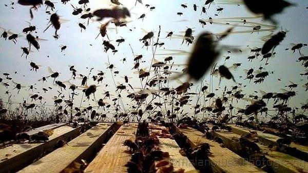 حصاد عسل النحل من الخلية إلى الصنبور مباشرة ! 1