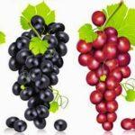 أغذية تساعدك على حرق الدهون والقضاء على السمنة 2