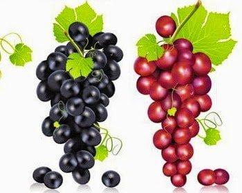 تناول العنب الأسود أو الأحمر يساعد على حرق الدهون