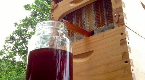 حصاد عسل النحل من الخلية إلى الصنبور مباشرة ! 3