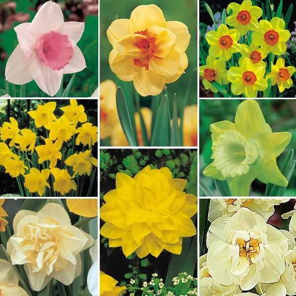 أحصل على أزهارك المفضلة مجاناً 1