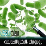 فوائد الحمص الغذائية و الصحية 3