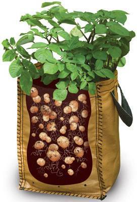 7 طرق لزراعة البطاطس (البطاطا) بنفسك في منزلك 5