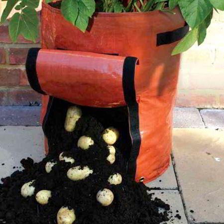 7 طرق لزراعة البطاطس (البطاطا) بنفسك في منزلك 6