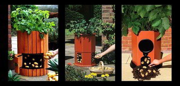 7 طرق لزراعة البطاطس (البطاطا) بنفسك في منزلك 8