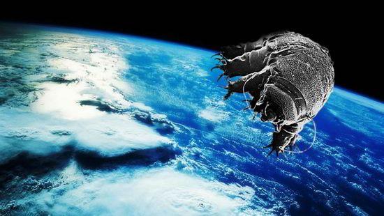 دب الماء أقوى و أغرب حيوان على وجه الأرض ! 5