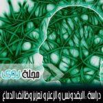 فوائد شجرة المورينجا Moringa Oleifera 3