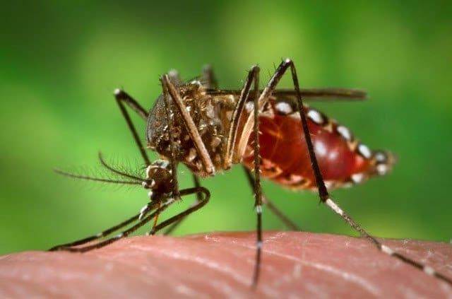 تعرف على فيروس زيكا Zika Virus وكيف تقي نفسك منه 2