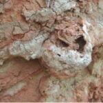 النمل الأرجنتيني يستخدم سلاحاً كيميائياً للغزو العالمي 7