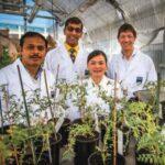 بكتريا تحول النباتات العادية إلى نباتات مقاومة لملوحة التربة 2