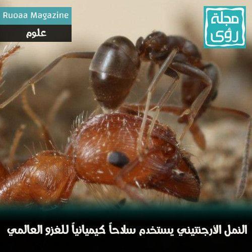 النمل الأرجنتيني يستخدم سلاحاً كيميائياً للغزو العالمي 1