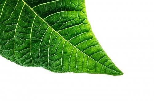 تقنية جديدة تحاكي النباتات لتدوير إنبعاثات الكربون و إنتاج الطاقة 2
