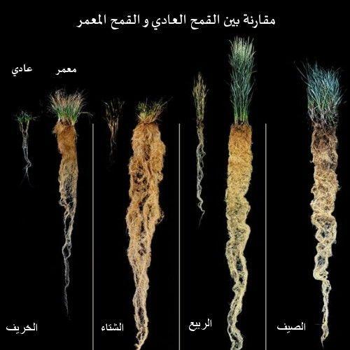 نباتات خارقة يمكنها إنقاذ العالم ! 4