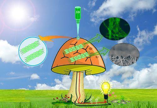تخليق فطر بيوني يولد الكهرباء من الميكروبات - مترجم 2