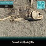 متلازمة القبول العشوائي - بقلم جلال مصطفى 2