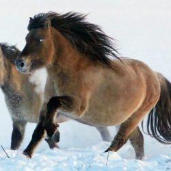 محاولة لإستنساخ حصان منقرض منذ 42 ألف عام 6