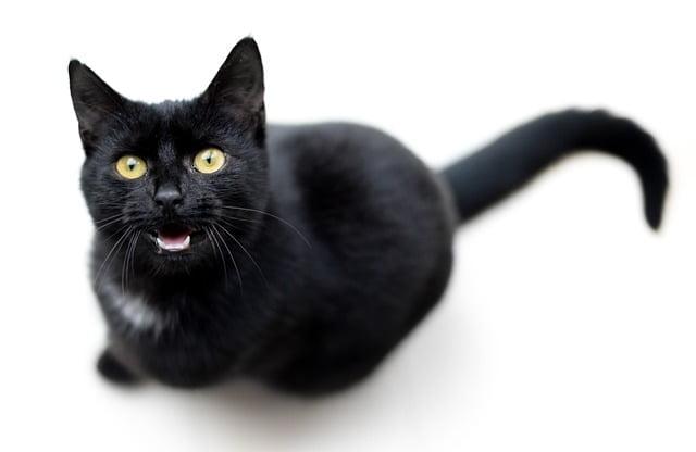 مياو توك : تطبيق يترجم مواء القطط إلى كلمات بشرية ! 1