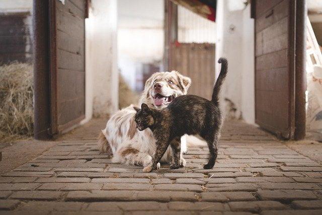 دراسة : الكلاب والقطط وآكلات اللحوم مستودع للأمراض 1