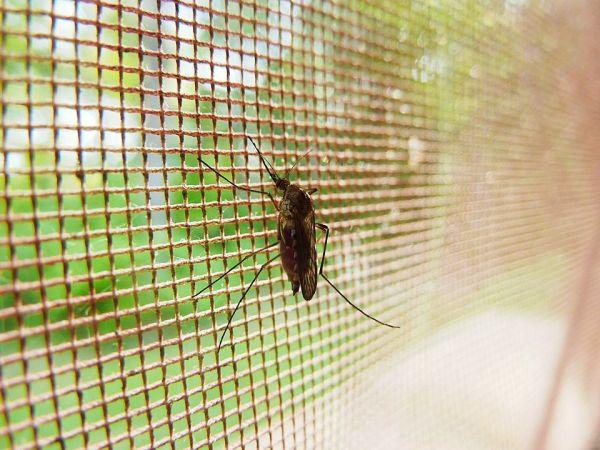 4 أسباب لفشل صاعق البعوض الكهربائي في التخلص من البعوض 3